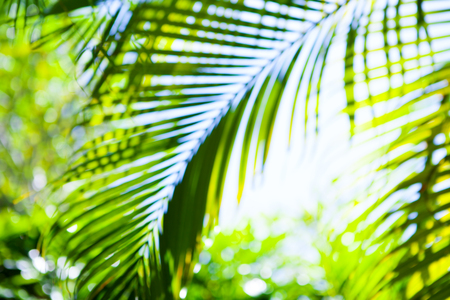 Tropical shiny summer palm green leaves blurred background. Copy space.
