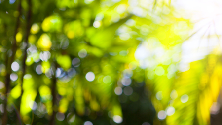 Tropical shiny summer palm green leaves blurred background. Copy space
