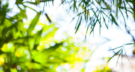 Tropical summer green leaves, bamboo tree blurred background. Copy space Stock Photo