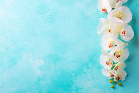 Orchid flower on blue background. Top view. Copy space.