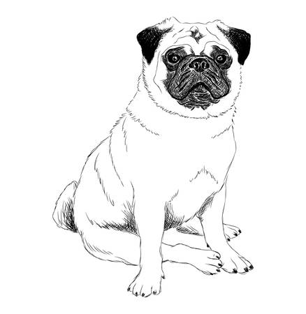 Black and white illustration of a pug dog in sitting posture Stock Illustratie