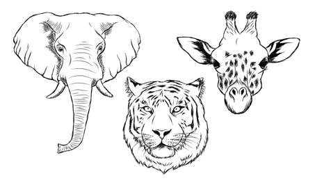 Set of black and white hand drawn wild animals. Illustration of elephant, tiger and giraffe.