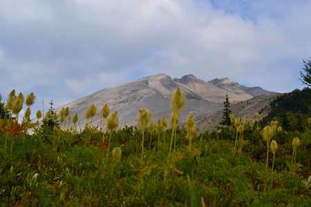 Mount Assiniboine Provincial Park, Canada. Beautiful mountains, forest, path across the plains though Wonder Pass. 写真素材