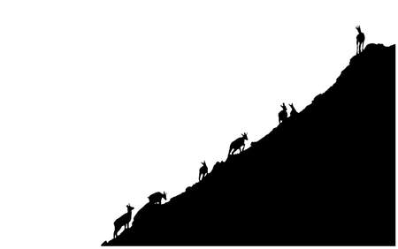 Black silhouettes of chamois climbing uphill isolated on white background. Illustration. 向量圖像