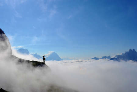 Mountain goat standing on top of the hill. High mountains, white clouds below. | Dolomites Italy. 版權商用圖片