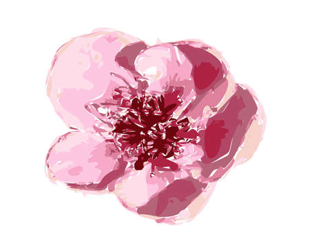 Illustration of beautiful gentle pink spatial flower isolated on white background. Single cherry blossom suitable for unique arrangement. Vector.