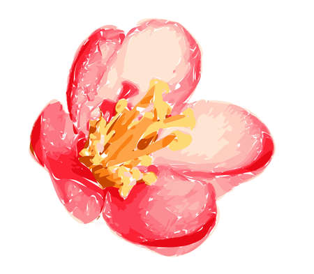 Illustration of beautiful gentle red spatial flower isolated on white background. Single flowering quince suitable for unique arrangement. Vector. Ilustracja