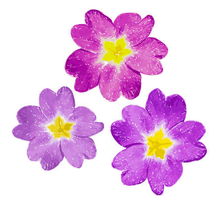 Pink and violet flower with yellow middle isolated on white background. Vector Illustration.