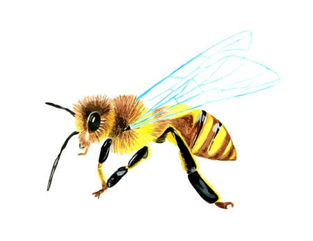 Hand drawn watercolor colorful illustration of wasp isolated on white background. Vektorové ilustrace
