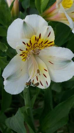 spotted flower: Spotted white flower, macro shot