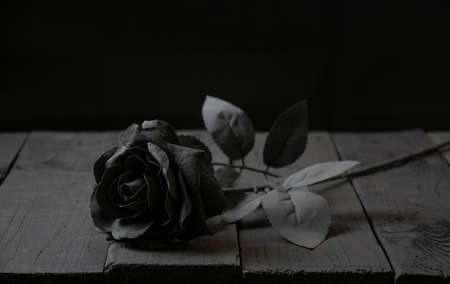 A black rose lies on a black background