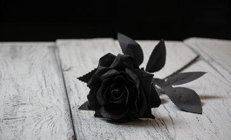 A black rose lies on a white background Standard-Bild