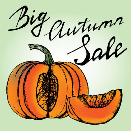 Autumn Sale Concept. Chopped pumpkin hand drawn handwriting letters vector