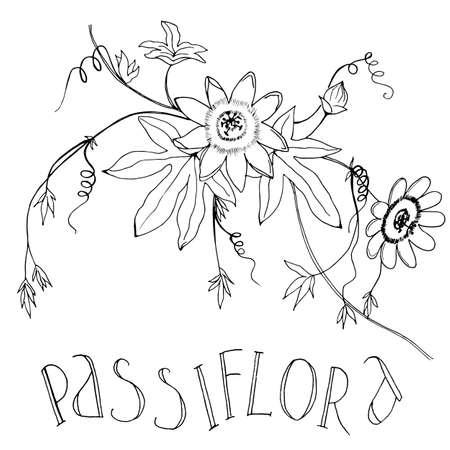 Illustration de croquis de vecteur de passiflore, texte manuscrit