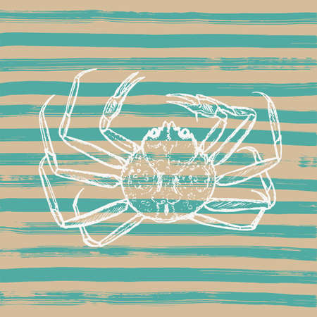 beige: Hand-drawn sketch illustration of crab on striped background. Illustration