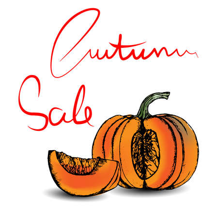 Autumn Sale Lettering and hand drawn pumpkin. Vector illustration