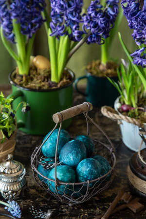 colored blue Easter eggs in vintage basket with spring flowers, dark rustic background