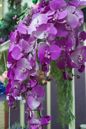 Bouquet of bright pink and purple flowers hanging from the roof Stock Photo