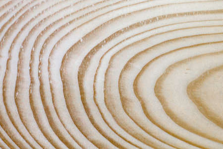 Extraordinarily beautiful pine wood texture with a pattern of annual rings