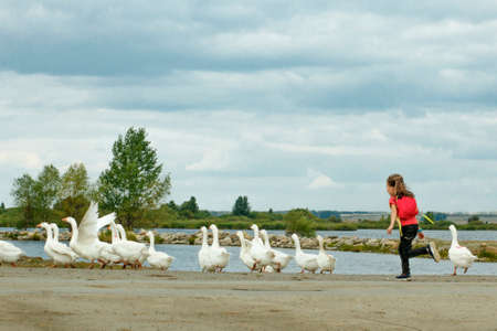 A girl grazing geese in the summer in the village Foto de archivo