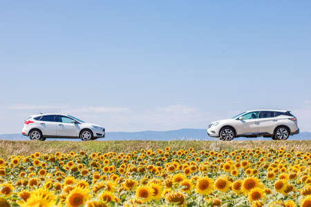 Two white cars on the track turned to each other. Sunflower field, sky on background
