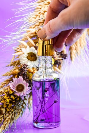 Glass dropper with a drop of cosmetic oil and dried flowers and herbs on purple background. Natural organic herbal skin care oil, selective focus, Facial liquid serum with collagen and peptides. Skin care essence for beautiful healthy skin