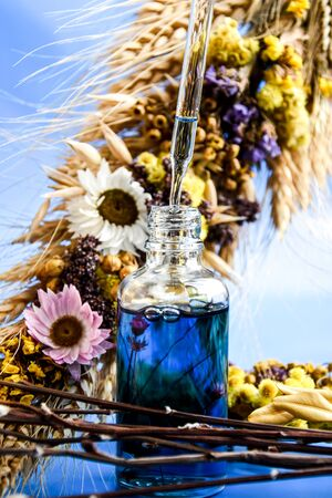 Glass dropper with a drop of cosmetic oil and dried flowers on blue background. Natural organic herbal skin care oil, selective focus, Facial liquid serum with collagen and peptides. Skin care essence for beautiful healthy skin