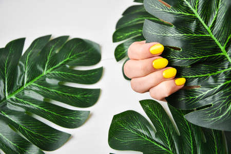 Female hand with yellow nail design. Yellow nail polish manicure. Female hand hold green leaf on gray background. Tropical background with woman's hand