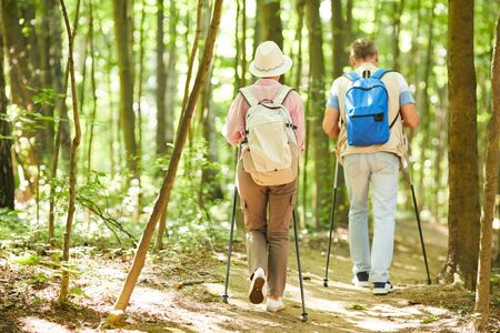 Rear view of couple with backpacks behind their backs doing nordic walking in the forest in summer sunny day