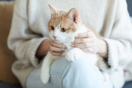 Close-up of domestic cat sitting on his owner's knees and relaxing