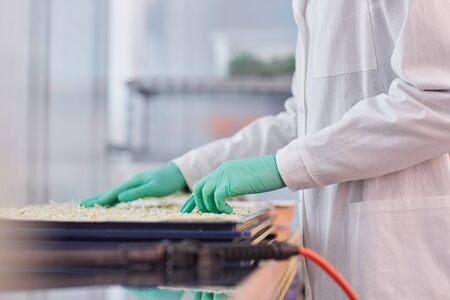 Close-up of scientist in protective gloves and in white coat standing and sowing seeds in the lab