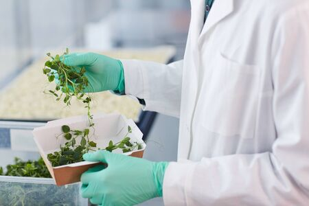 Close-up of farmer in white coat holding box with sprouts of young green plants he is going to grow them