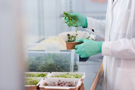 Close-up of farmer in white coat and in protective gloves Taking green plants from the box to make a sample in the lab Stock Photo