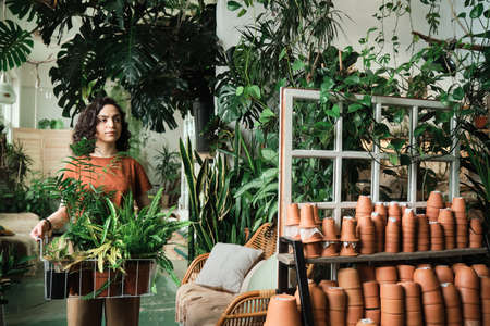 Young woman holding basket with potted plants and carrying it she working in flower shop Stockfoto