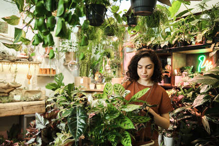 Young saleswoman caring about green plants and flowers while working in flower shop