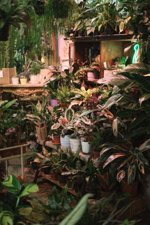 Image of exotic green plants and beautiful flowers on the shelves in botany garden