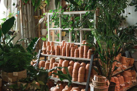 Image of ceramics pots on the shelves and green exotic plants in the flower shop