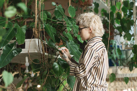 Young florist caring about green leaves of the plant on the wall