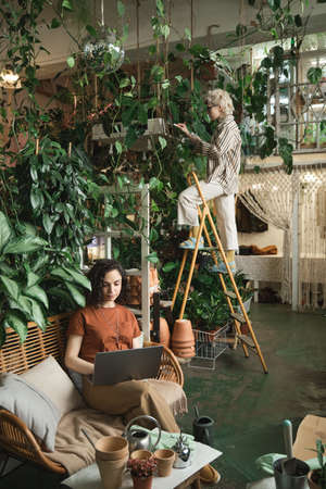 Young florist sitting on sofa and working on laptop with her colleague standing on ladder and caring about plants in the background Stockfoto