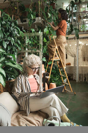 Businesswoman in eyeglasses sitting on sofa and working on laptop with her colleague caring about plants in the background Stockfoto