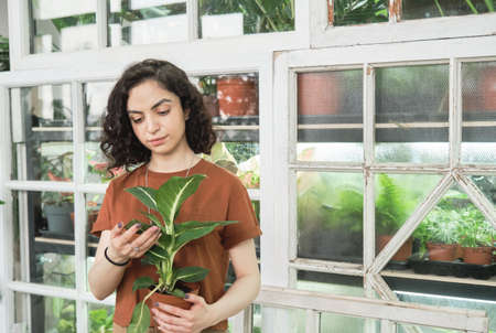 Young florist examining the leaves of potted plant in her hands she working in the botany garden
