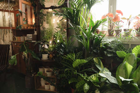 Image of domestic room with large amount of potted green plants and flowers around Stockfoto