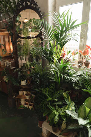 Image of exotic green potted plants and flowers in the room