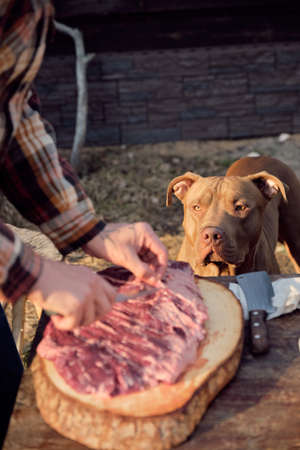 Close-up of dog looking at slice of meat while his owner preparing it for dinner outdoors