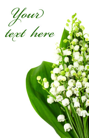muguet: bunch of  lily of the valley over white
