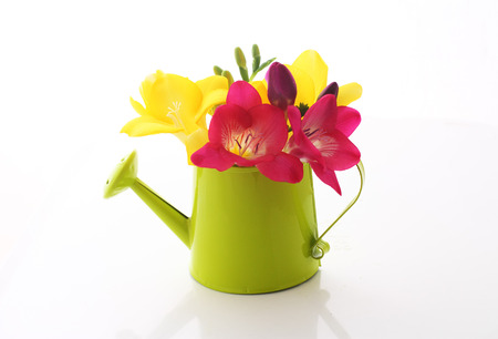 Beautiful freesia flowers  in watering can isolated on white photo