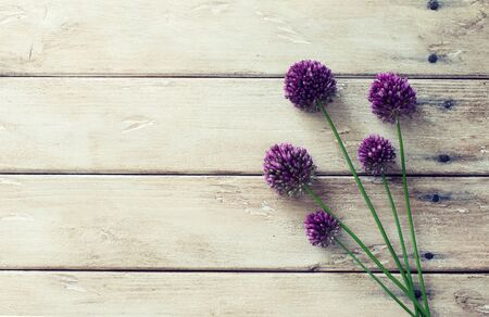 Allium flowers on natural wooden background. Flat lay. Copy space 免版税图像