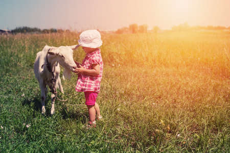 Little girl child with white goat outdoor. Summer meadow, childhood in nature Stock Photo