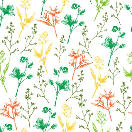 wort: Vector Illustration of Scetch Herb and Wild Flowers for Design, Website, Background, Banner. Hand Drawn Seamless Pattern Element Template