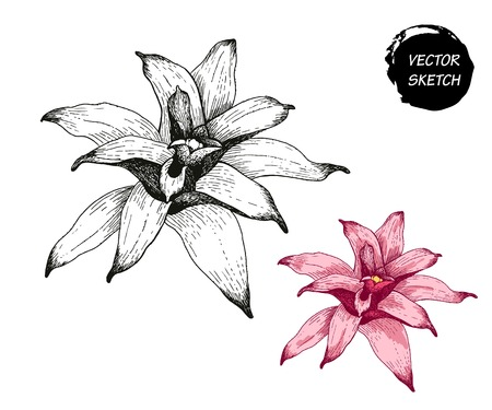 exotic plant: Vector Illustration of tropical Flowers in Sketch Style for Design, Website, Background, Banner. Doodle Summer Plant Element Template in color. Beach Botany